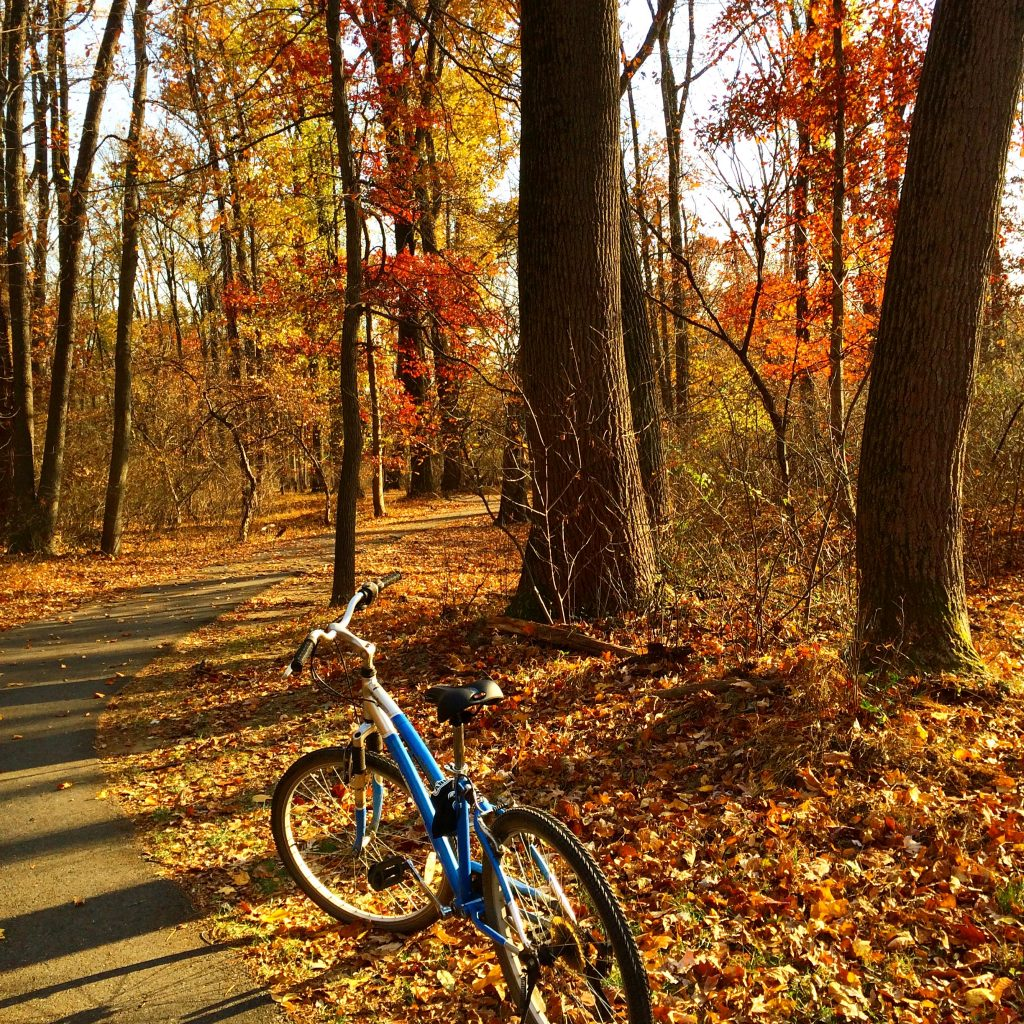 A blue bicycle parked in a fall wood near a bicycle path.